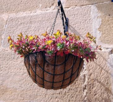 Een hangplant fleurt een kleine ruimte op